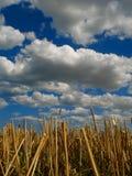 Restolho e nuvens Fotografia de Stock Royalty Free