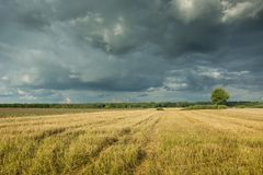 Restolho e nuvens de tempestade escuras no céu fotos de stock royalty free