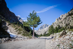 Restonica valley in Corsica Stock Photography