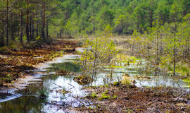 Restoration of bog ecosystem in Estonia. Wetland ecosystem restoration and conservation area in Soomaa, Estonia royalty free stock photography