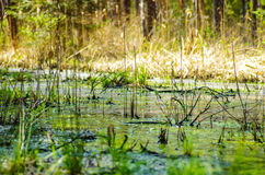 Restoration of bog ecosystem. Wetland ecosystem restoration and conservation area in Soomaa, Estonia Stock Photography