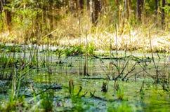 Restoration of bog ecosystem. Wetland ecosystem restoration and conservation area in Soomaa, Estonia stock photography