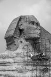 Restoration of the Great Sphinx of Giza in Egypt. Workers work on the restoration of The Great Sphinx of Giza.  The Sphinx is a limestone statue of a mythical Stock Photo
