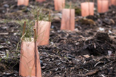 Restoration of native plants Stock Photos