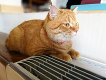 Restos alaranjados bonitos do gato na tabela ao lado da caixa de ar fotos de stock royalty free