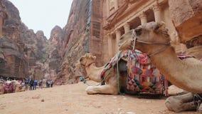 Restos beduínos do camelo perto do Tesouraria Al Khazneh filme