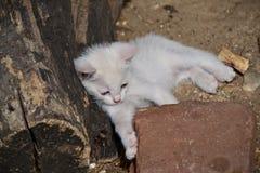 Restos blancos del gatito en el sol imagen de archivo