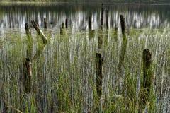 Restos da ponte de madeira abandonada velha Cais desolado Reflexão da floresta e do céu na água Costa de um único lago foto de stock royalty free