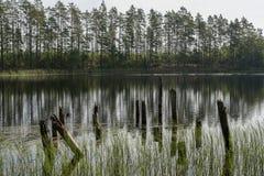 Restos da ponte de madeira abandonada velha Cais desolado Reflexão da floresta e do céu na água Costa de um único lago imagens de stock
