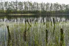 Restos da ponte de madeira abandonada velha Cais desolado Reflexão da floresta e do céu na água Costa de um único lago fotografia de stock