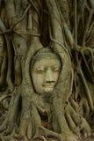 Restos de las estatuas de Buda la cabeza en el árbol Wat Mahathat Imagenes de archivo
