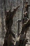Restos de un árbol Imágenes de archivo libres de regalías
