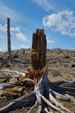 Restos de un árbol Imagen de archivo