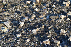 restos dispersados na terra Fotos de Stock