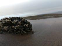 Restos do oceano Fotografia de Stock