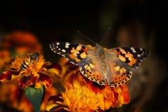 Restos hermosos de la mariposa en una flor amarilla Foto de archivo libre de regalías