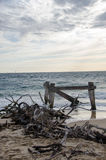 Restos na praia Imagem de Stock Royalty Free