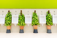 Restroom interior with white urinal row and ornamental plants Stock Photos