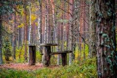 Restzone im Wald Stockbild