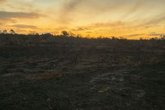Result after a controlled fire burn. Result after a controlled fire burn near Collingwood Park, Ipswich City, Queensland, Australia royalty free stock photos