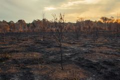 Result after a controlled fire burn. Result after a controlled fire burn near Collingwood Park, Ipswich City, Queensland, Australia stock images