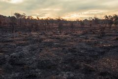 Result after a controlled fire burn. Result after a controlled fire burn near Collingwood Park, Ipswich City, Queensland, Australia royalty free stock photo