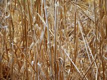 Result of the dry season. Dried grass Royalty Free Stock Images