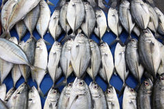 Group of small fish Stock Photography