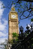 Resultaat van Big Ben achter een verwarring van takken Stock Afbeelding