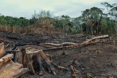 Resultaat van de ontbossing van het regenwoud met gebrand onderaan gebieden en uitgebreid registreren royalty-vrije stock foto's