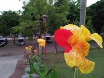Resultaten av fotona av gula blommor blandade med rött är mycket charmiga royaltyfria bilder