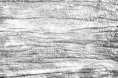 Resuma el fondo del blanco del grunge Textura de madera quemada Foto de archivo libre de regalías