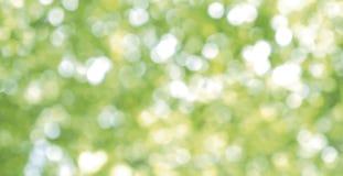 Resuma el fondo ligero borroso de la naturaleza del bokeh de hojas verdes Imagenes de archivo