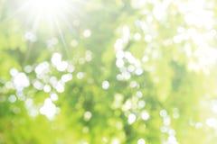 Resuma el fondo ligero borroso de la naturaleza del bokeh de hojas verdes Fotos de archivo