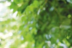 Resuma el fondo ligero borroso de la naturaleza del bokeh de hojas verdes Imagen de archivo