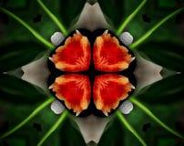 Resuma la estrella echada a un lado sacada del ejemplo 4 de la mandala 3D Imágenes de archivo libres de regalías