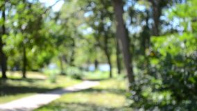 Resuma la pista de senderismo borrosa de los fondos en el parque frondoso verde metrajes