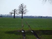 Resurgent träd Arkivbild