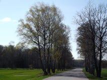 Resurgent träd Arkivbilder