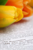 Resurrection. Open Bible with selective focus on the text in Matthew 28 about Jesus' resurrection. Shallow DOF stock image