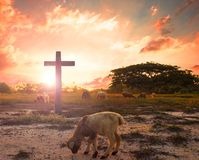 Resurrection concept: the Lamb of God in front of the cross of Christ Jesus. World environment day concept:beautiful meadow wallpaper background Royalty Free Stock Photography