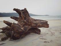 Resztki drzewny bagażnik obraz stock