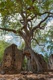Resztki Gede w Kenja, Fotografia Royalty Free