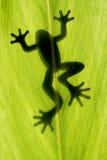 Retén de la rana en la hoja Imágenes de archivo libres de regalías