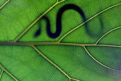 Retén de la serpiente en la hoja imagenes de archivo