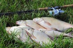 Retén de pesca - brema imagen de archivo