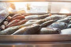 Retén de pescados frescos imagen de archivo libre de regalías