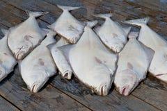 Retén del halibut foto de archivo libre de regalías