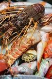 Retén fresco de pescados Foto de archivo
