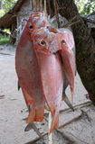 Retén fresco de pescados imagen de archivo